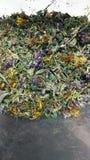 Imagem móvel de ervas secadas imagem de stock royalty free