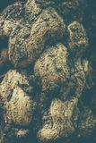 Imagem macro com textura verde da casca de árvore na floresta velha imagens de stock royalty free