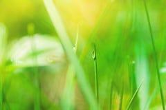 Imagem macro da gota na grama, profundidade de campo pequena Imagem de Stock