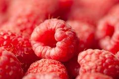 Imagem macro da opinião das framboesas frescas Imagens de Stock Royalty Free