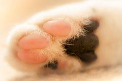 Imagem macro da pata branca dos gatos fotografia de stock
