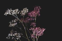 Imagem macro de flores secadas com fundo escuro imagem de stock royalty free