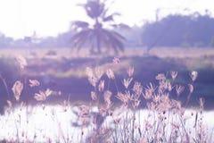 Imagem macro de gramas selvagens, profundidade de campo pequena Efeito do vintage Gramas selvagens da natureza rural bonita no vi fotografia de stock royalty free
