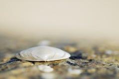 Imagem macro de um escudo na areia. imagens de stock