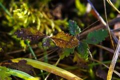 Imagem macro do musgo verde na terra da floresta fotos de stock royalty free