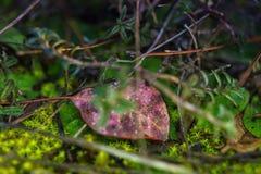 Imagem macro do musgo verde na terra da floresta fotos de stock