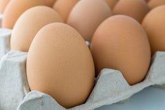 Imagem macro do ovos na bandeja, Imagens de Stock Royalty Free