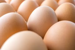 Imagem macro do ovos na bandeja Fotografia de Stock Royalty Free