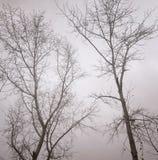 Imagem monocromática do sepia de árvores desencapadas contra um céu nebuloso no outono atrasado Vista inferior imagem de stock royalty free