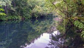 Imagem muito quieta do rio Eume com os bancos completos das samambaias imagens de stock