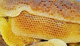 imagem natural do macro do rodopica do melifera dos apis do mel Imagens de Stock