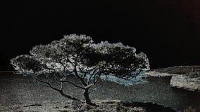 Imagem negativa da árvore de Mallorca Imagens de Stock Royalty Free