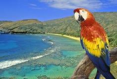 A imagem panorâmico composta de um papagaio colorido e Hanauma latem, Havaí fotografia de stock