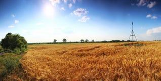 Imagem panorâmico de campos de trigo com o céu azul profundo Fotos de Stock