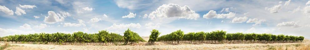 Imagem panorâmico dos vinhedos Foto de Stock Royalty Free