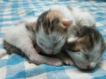 Imagem pequena de dois gatinhos do bebê imagem de stock