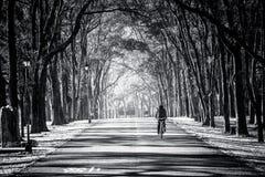 Imagem preto e branco de um cavaleiro da bicicleta que vai ao longo da estrada fotos de stock