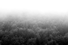 Imagem preto e branco de uma floresta em um dia nevoento, situada na cidade de Valli del Pasubio, Itália Foto de Stock Royalty Free