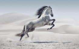 Imagem que apresenta o cavalo branco de galope Imagem de Stock Royalty Free