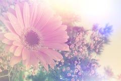 Imagem retro da margarida do Gerbera Fotos de Stock Royalty Free