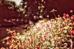 Imagem retro do moderno do vintage de pouca flor imagens de stock