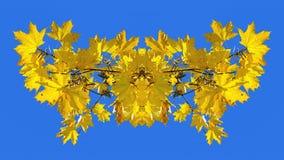 Imagem simétrica feita da foto das folhas de bordo amarelas Fotos de Stock Royalty Free