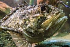 Imagem subaquática de peixes tropicais Foto de Stock