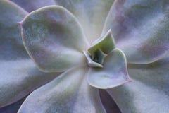 Imagem suculento do textute da opinião superior da flor fotos de stock royalty free
