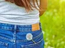 Imagem temperamental do verão de uma flor do dente-de-leão em um bolso das calças de brim no fundo verde imagem de stock royalty free