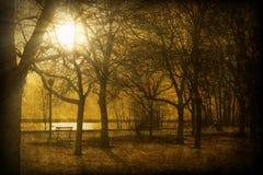 Imagem Textured de Sun que brilha através das árvores Imagem de Stock Royalty Free