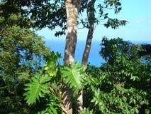 Imagem tomada em um cruzeiro das caraíbas aos vários destinos tropicais foto de stock