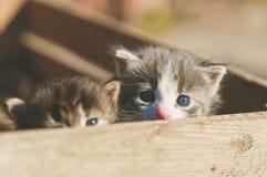 Imagem tonificada colorida de dois gatinhos engraçados pequenos em um rus de madeira fotografia de stock