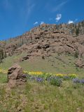 Imagem vertical de Rocky Cliff com os Wildflowers amarelos e roxos imagem de stock royalty free