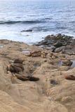 Imagem vertical dos selos e dos leões de mar na costa rochosa do oceano Fotografia de Stock Royalty Free