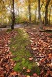 Imagem vibrante da paisagem da floresta da queda do outono Imagens de Stock