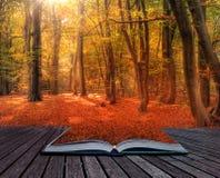 Imagem vibrante da paisagem da floresta da queda do outono nas páginas do livro Imagem de Stock