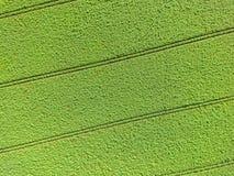 Imagen aérea abstracta de un campo verde, como un fondo y te Imagen de archivo libre de regalías