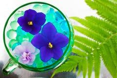 Imagen abstracta con las violetas en tema floricultural Imagen de archivo libre de regalías