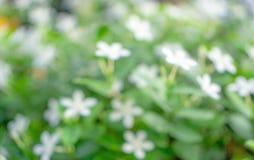 Imagen abstracta de la naturaleza de la hoja del verdor, foto del bokeh de la flor blanca suave fresca que florece en fondo borro fotos de archivo
