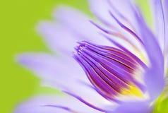 Imagen abstracta del agua-lirio de la flor de loto del primer Fotografía de archivo libre de regalías
