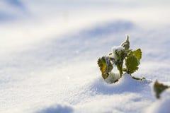 Imagen abstracta hermosa del contraste de la planta verde co del wildflower fotos de archivo