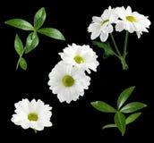 imagen aislada de la flor Imagenes de archivo