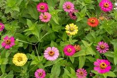 Imagen ascendente cercana de la flor colorida de la primavera imágenes de archivo libres de regalías