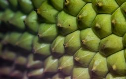 Imagen ascendente cercana de una cáscara de la fruta de Jack foto de archivo