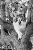 Imagen blanco y negro de la opinión de ángulo bajo el blanco y el gato de gato atigrado en un árbol imagenes de archivo