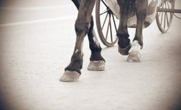Imagen blanco y negro de las piernas de un caballo imagen de archivo