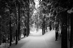 Imagen blanco y negro de un camino cubierto en la nieve en una madera, corazón Foto de archivo