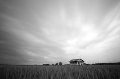Imagen blanco y negro del campo de arroz con la casa del abandono y el efecto suave dramático de la nube Imágenes de archivo libres de regalías