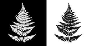 Imagen blanco y negro del vector del helecho Aislante negro de la silueta del helecho libre illustration