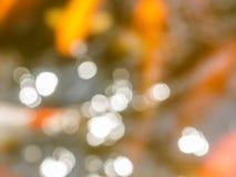 Imagen borrosa de la natación de la carpa en la charca Fotos de archivo libres de regalías